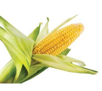 Corn, Sweet, ข้าวโพดหวาน (pesticide-free) 2 pcs