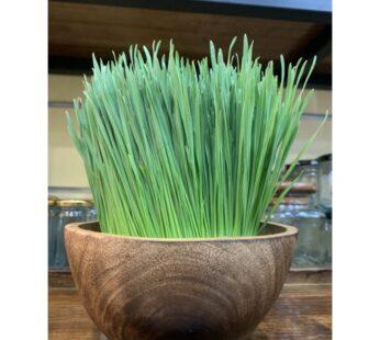 Pesticide Free, Fresh Wheatgrass 300 GRAM