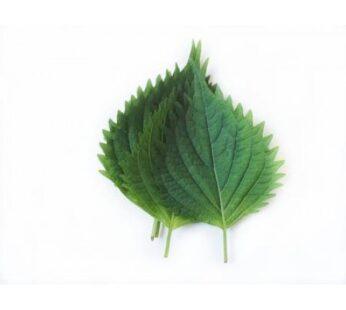 Oba Leaf , ใบโอบะ ( 10 Leaf / pack )